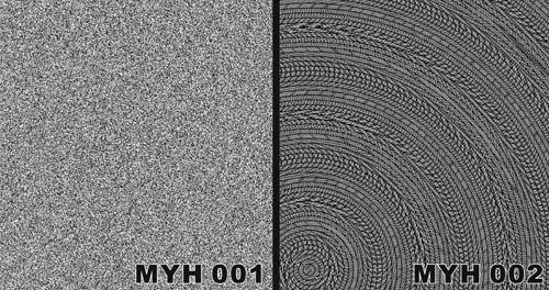 MYH 001 / MYH 002